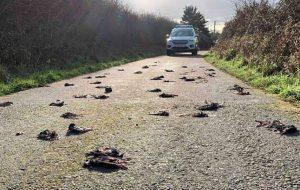 5G'nin toplu kuş ölümlerine neden olduğu iddiası